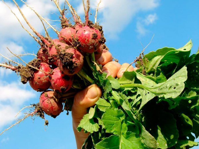 Agricultura ecológica agricultura ecològica