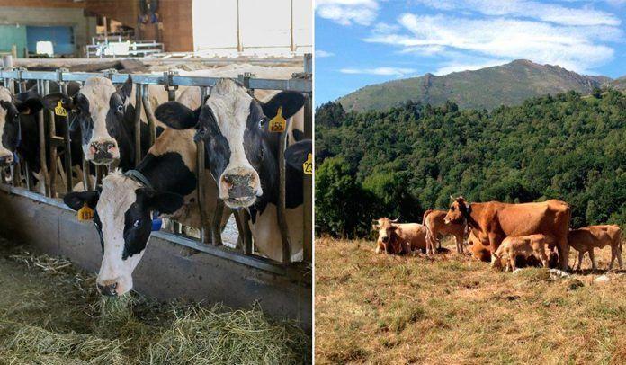 Política Agraria Política Agrària
