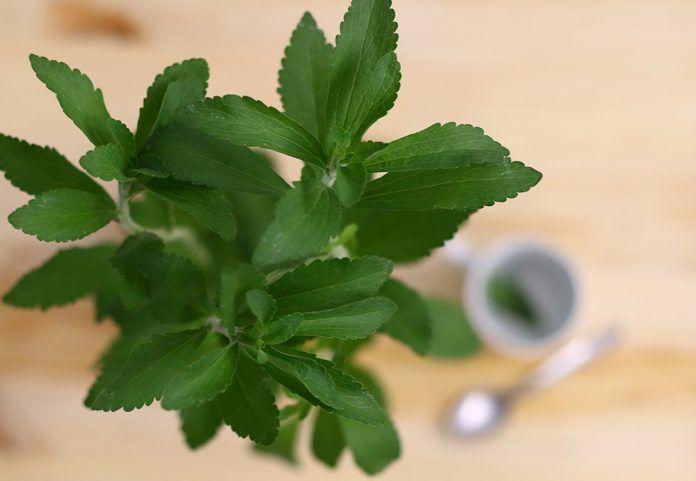 Permitida la stevia solo como infusión es permet la stevia