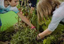 Entrega del IV Premio Nacional Huertos Educativos Ecológicos