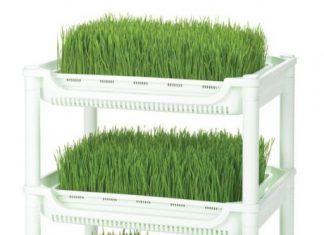 carro-germinacion-hierba-de-trigo-sproutman