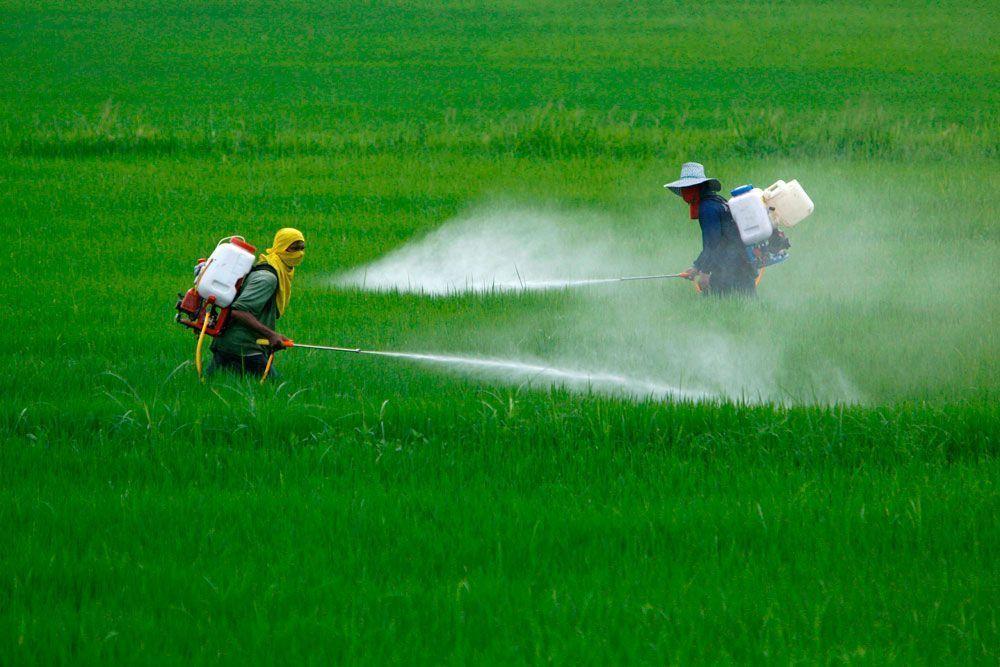 Más de un centenar de organizaciones y científicos reclaman cambios en la normativa de la UE sobre biocidas