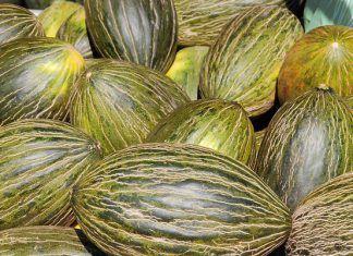 "European Patent Office again grants patent on melons: ""One single mutation is sufficient to patent a whole vegetable garden"" / La Oficina Europea de Patentes vuelve a otorgar patentes sobre melones: ""Una sola mutación es suficiente para patentar un huerto entero"" / L'Oficina Europea de Patents torna a atorgar patents sobre melons: ""Una sola mutació és suficient per patentar un hort sencer"""