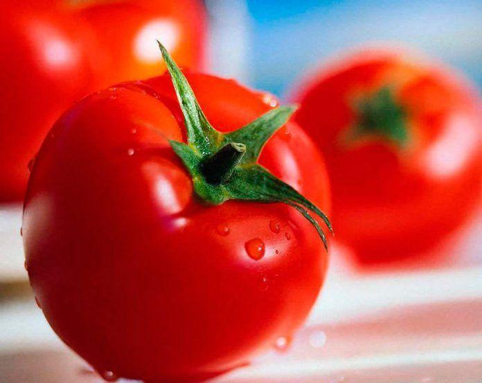 el tomate es una fruta una hortaliza una verdura ampliacion