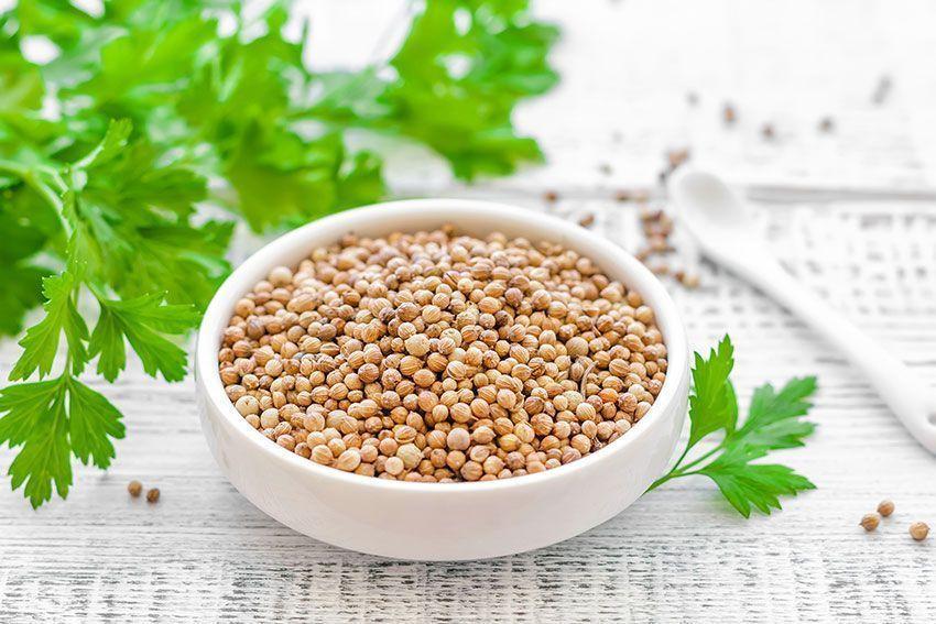 cilantro usos y propiedades