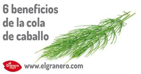 6 Beneficios De La Cola De Caballo Bio Eco Actual