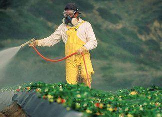 Insecticida clorpirifós, el nuevo glifosato