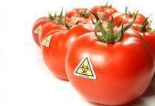 gmo tomato 537x363