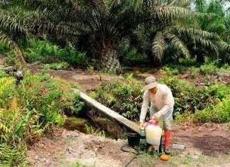 aceite de palma indonesia carro de combate