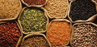 semillas preciosas European Patent Office calls the prohibition on the patenting of plants and animals from conventional breeding into question pepper