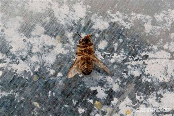 abejas murcia pesticidas
