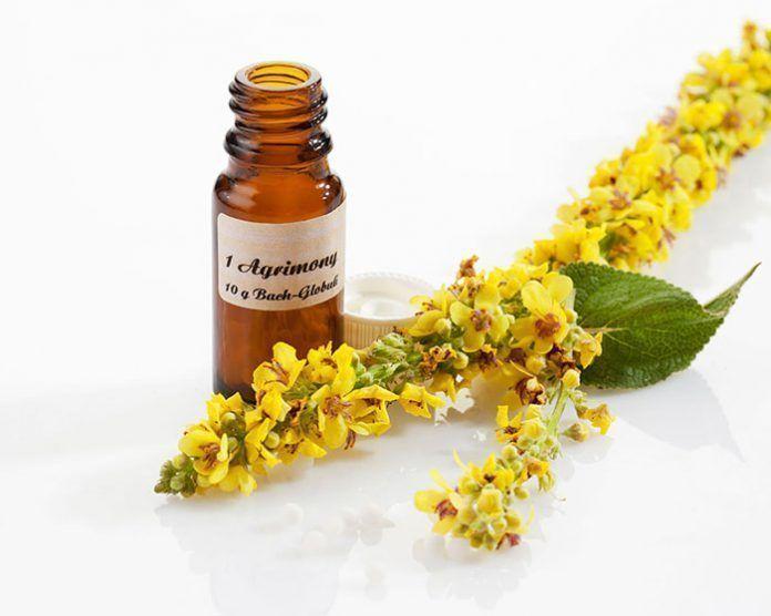 terapias naturales naturopatia