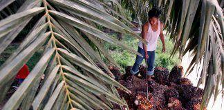 aceite palma Efeverde