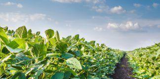 L'agricultura ecològica, amb més biodiversitat, redueix els riscos de seguretat alimentària