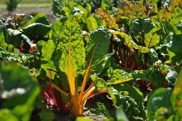 La cantidad de cultivos dedicados a la producción ecológica crece un 70% en 10 años en Europa Dinamarca Ecológica Dinamarca Ecològica 100% ecològica