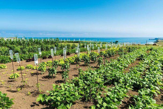 Agua de mar agricultura aigua de mar agricultura