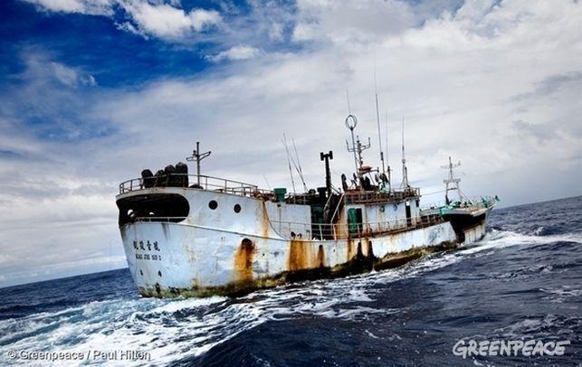 Esclavitud y sobrepesca: los peligros detrás de la comida para animales