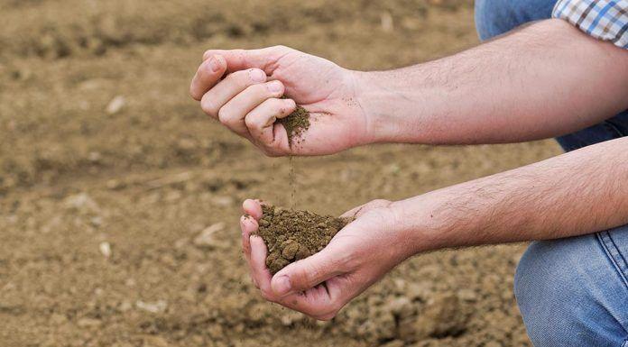 Bancos de tierras agroecológicos bancs de terra agroecològics