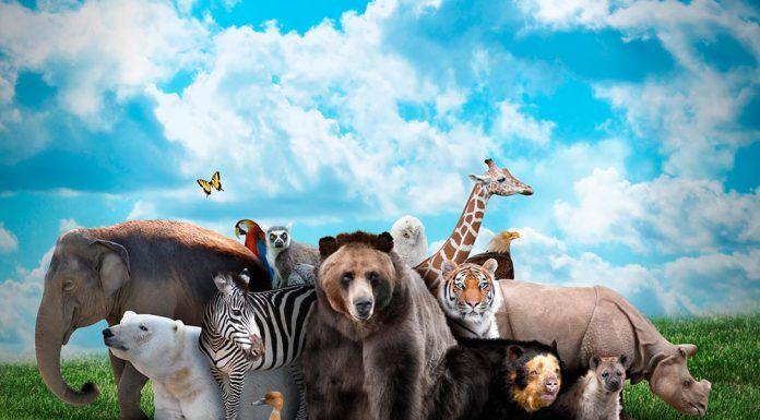 El cambio climático acelera la extinción de especies El canvi climàtic accelera l'extinció d'espècies