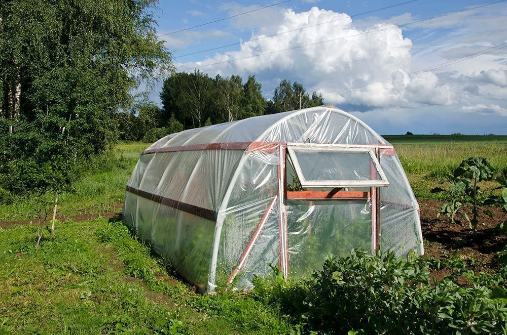huerto en otoño horticultura en otoño