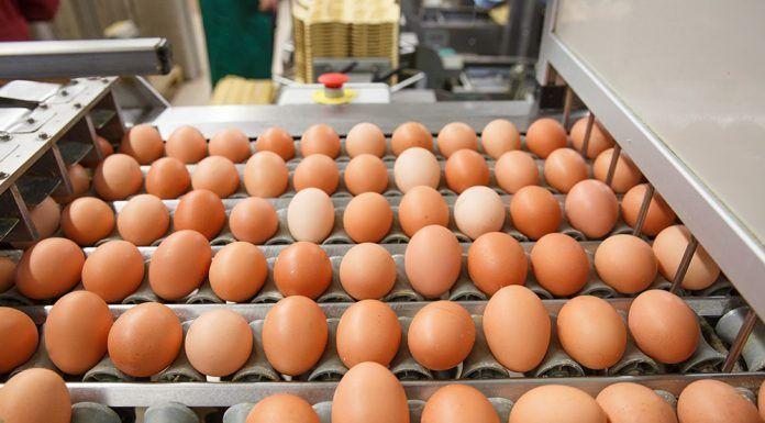 Huevos contaminados ous contaminats