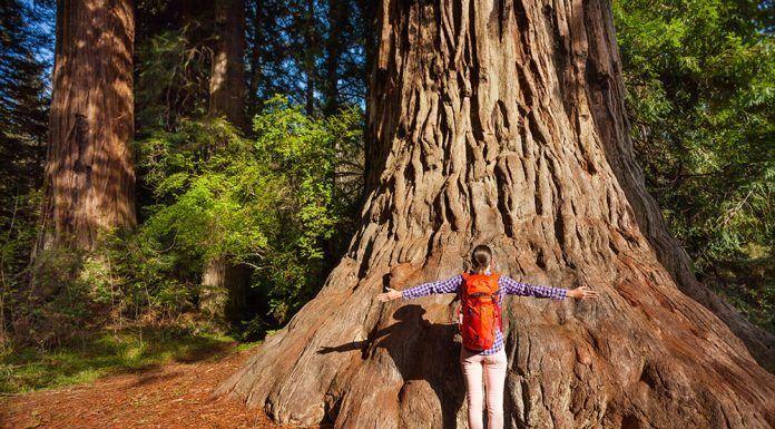 árboles del mundo arbres del món
