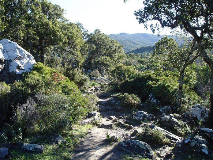 Ecoturismo Parque Natural de los Alcornocales