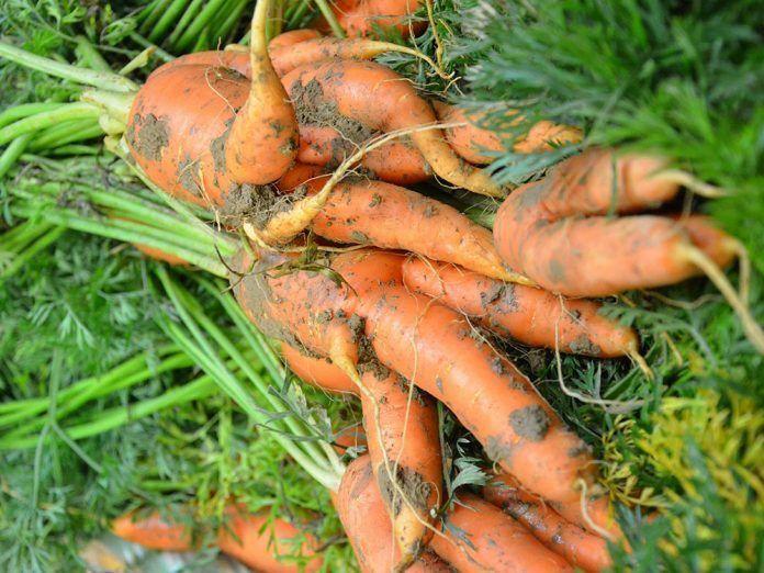 fibl organic farming world food supply agricultura ecológica puede alimentar al mundo