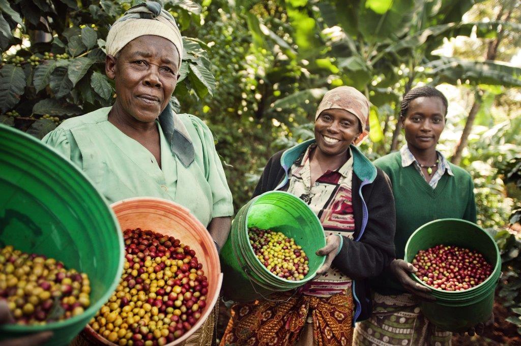 comercio justo sello fairtrade