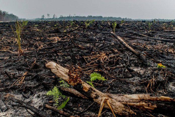 industria del aceite de palma