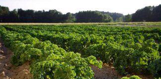 La agricultura de la UE necesita una dirección más clara hacia la sostenibilidad a largo plazo