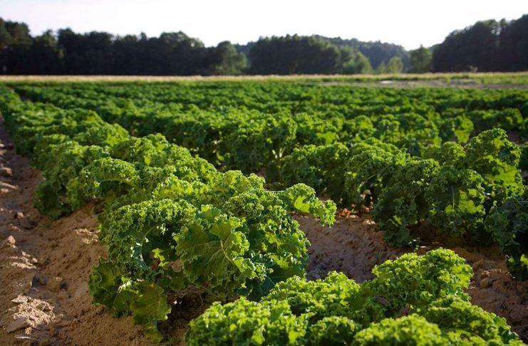 La agricultura de la UE necesita una dirección más clara hacia la sostenibilidad a largo plazo Australia's status as world leader in organic to be irreversibly undermined