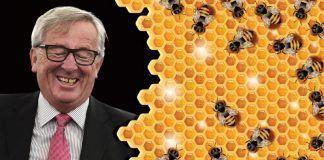 """Las ONG piden a Juncker, """"el amigo de las abejas"""", que las proteja"""
