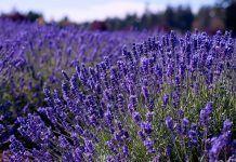 Hierbas Aromáticas y Medicinales en el BioHuerto y la Cocina herbes aromàtiques al biohort i la cuina herbes medicinals plantes medicinals herbes medicinals
