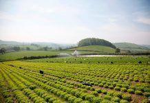 A new payment model for the Common Agriculture Policy Un nuevo modelo de pago para la Política Agraria Común Un nou model de pagament per a la Política Agrària Comuna