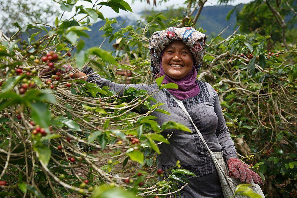 comercio justo fairtrade Los pequeños productores no ganan lo suficiente para alimentar a sus propias familias