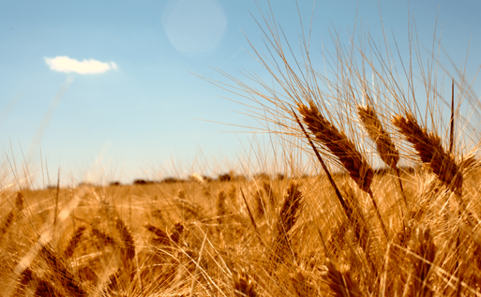 blat antic