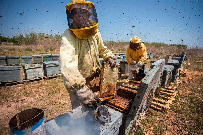 Las abejas, acorraladas por el cambio climático y mermadas por los robos