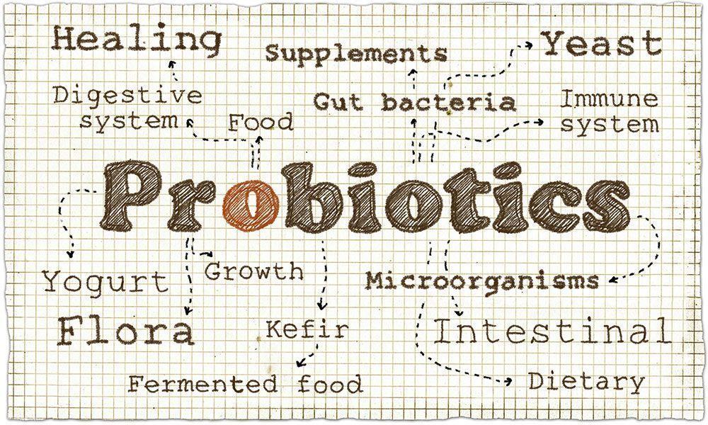 Cómo cuidar de nuestra salud intestinal en vacaciones probióticos
