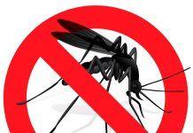 Los aceites esenciales alternativa natural a los insecticidas