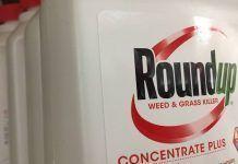 "Sentencia del ""Caso Roundup"": Monsanto tendrá que pagar 289,2 millones de dólares a un hombre con cáncer terminal"