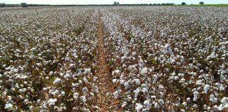 """Sevilla: """"Curso de producción de fibras naturales y manufactura de textiles verdes"""""""