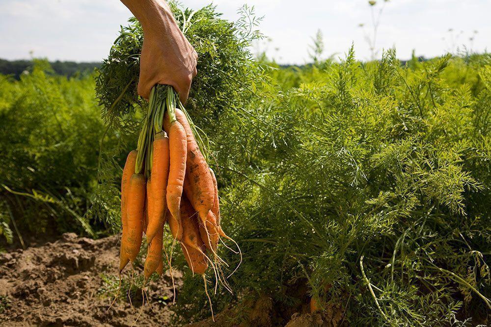 La certificación ecológica en España: ¿Quién acredita que un producto es ecológico-biológico-orgánico?