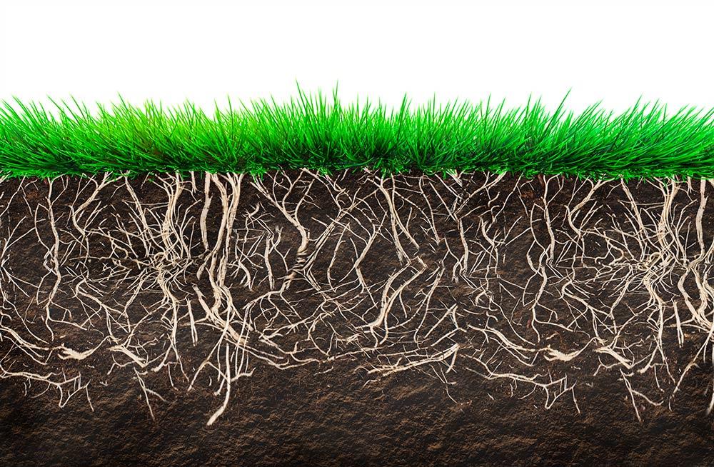 Vivificar el suelo sistemas productivos más sostenibles