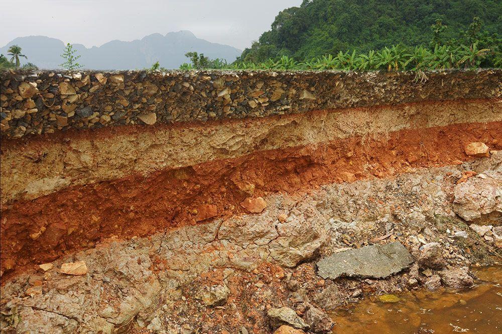 Vivificar el suelo: el camino a sistemas productivos más sostenibles