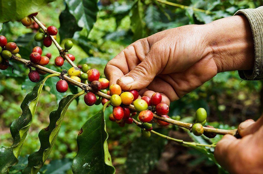 ¿Qué cantidad de café al día es óptima?