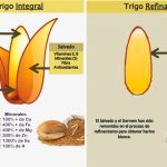 Cereales integrales vs. refinados cereals integrals refinats