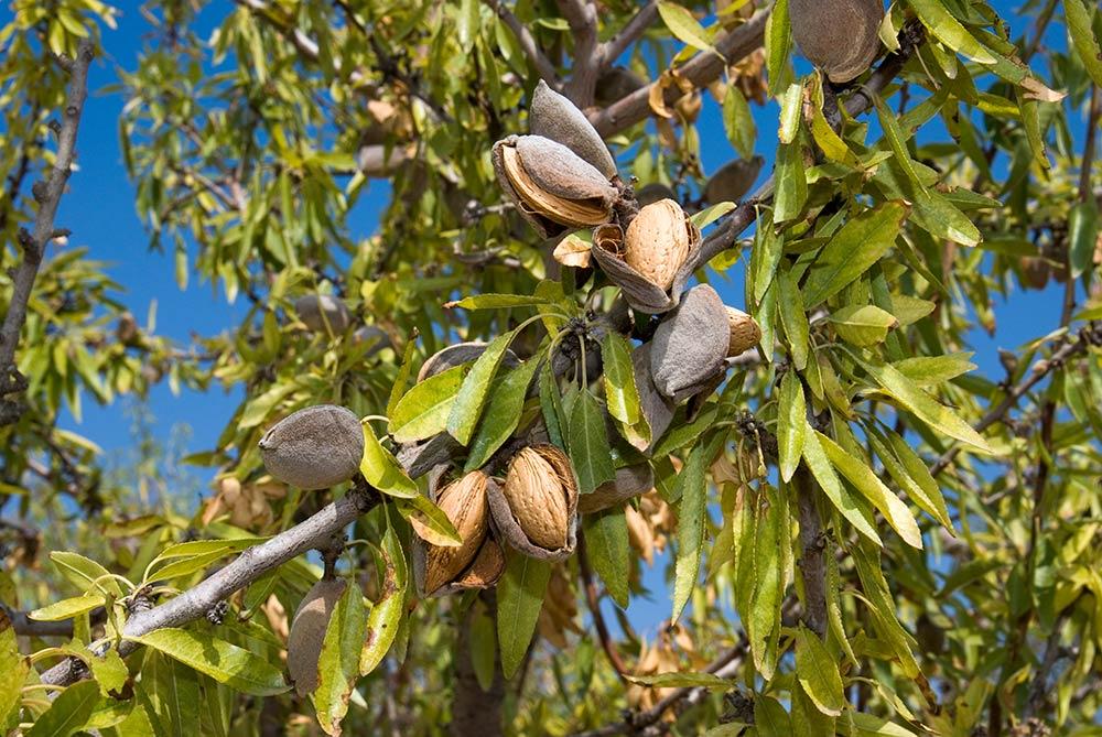 Beneficios de los frutos secos y cómo incorporarlos cómodamente a nuestra dieta almendras
