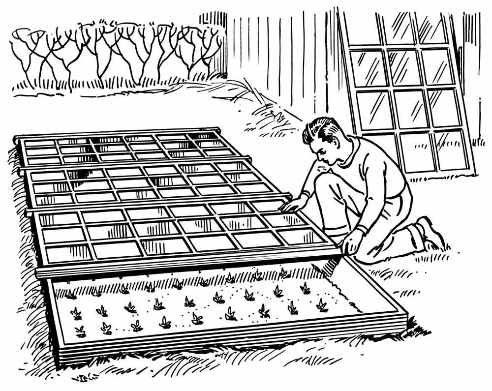 semillas biojardinero
