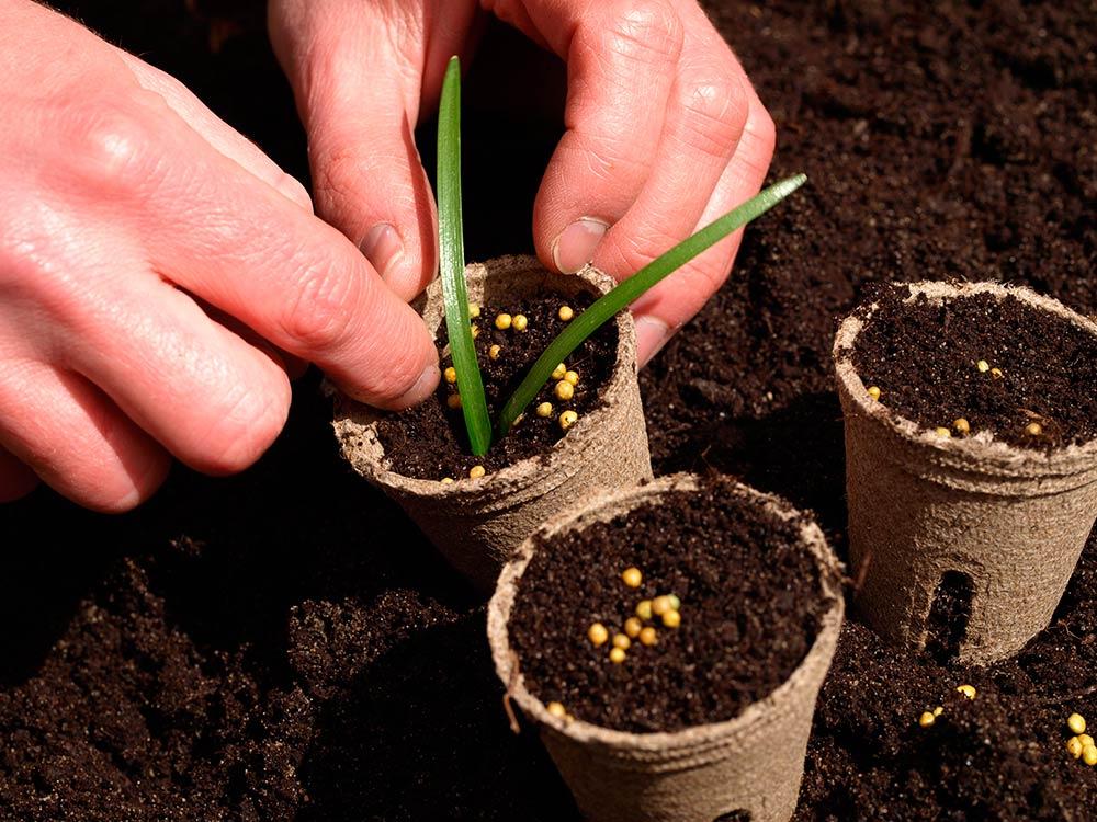 Cómo sembrar las semillas